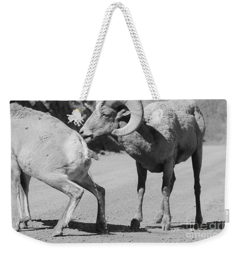 Nature Weekender Tote Bag featuring the photograph Take That by Tonya Hance