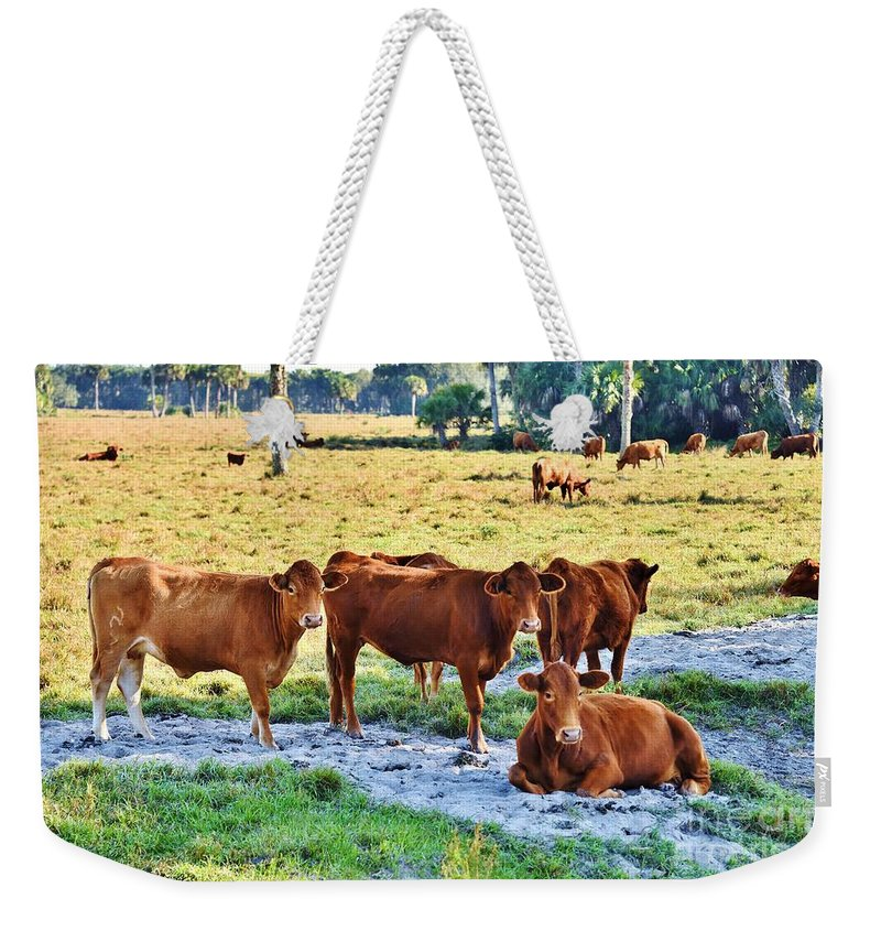 Cows Weekender Tote Bag featuring the photograph Taking A Break by Lisa Renee Ludlum