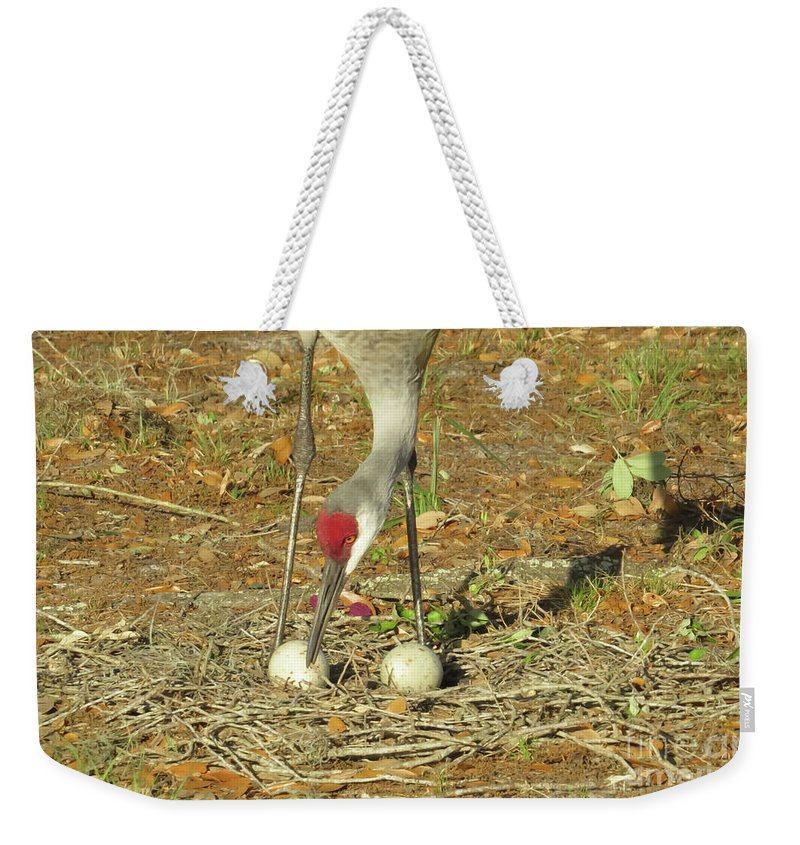 Sandhill Cranes Weekender Tote Bag featuring the photograph Taking Care Of Her Eggs by Zina Stromberg