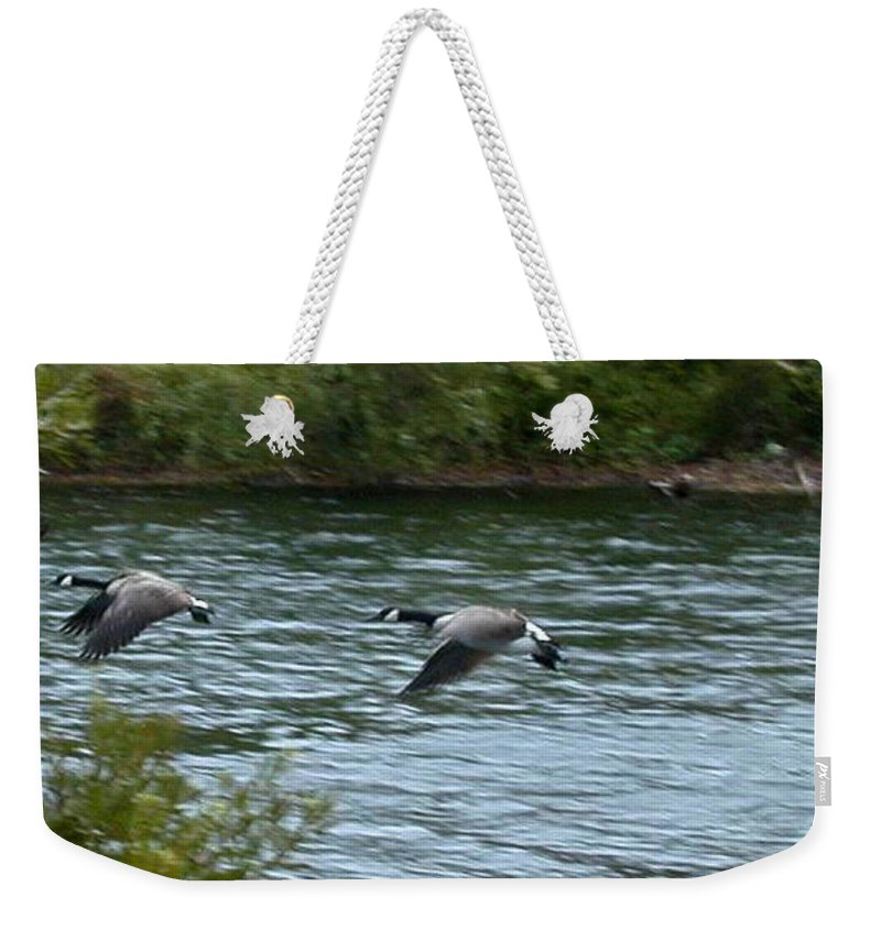Canadian Weekender Tote Bag featuring the photograph Taking Flight by Douglas Barnett