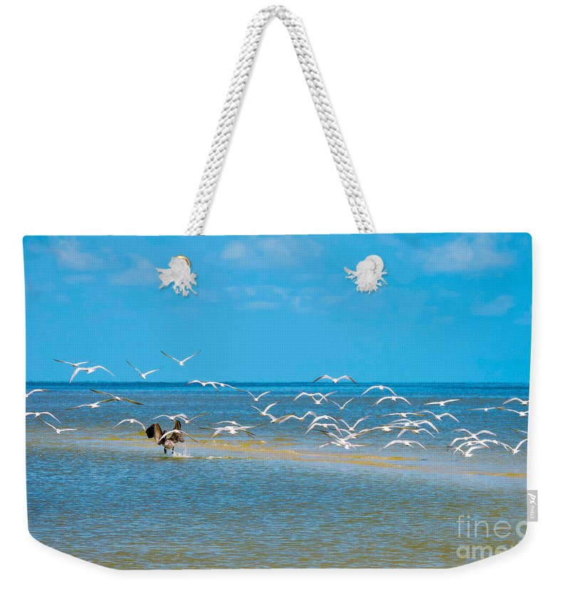 Shorebirds Weekender Tote Bag featuring the photograph Taking Flight by Marilee Noland