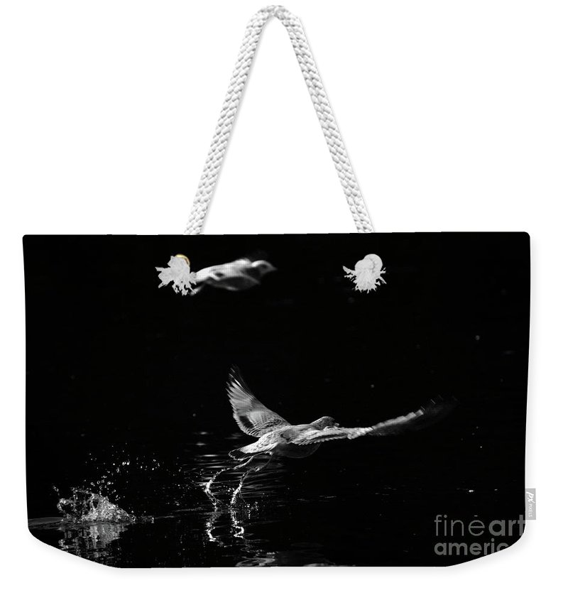Seagull Weekender Tote Bag featuring the photograph Taking Off by Karol Livote