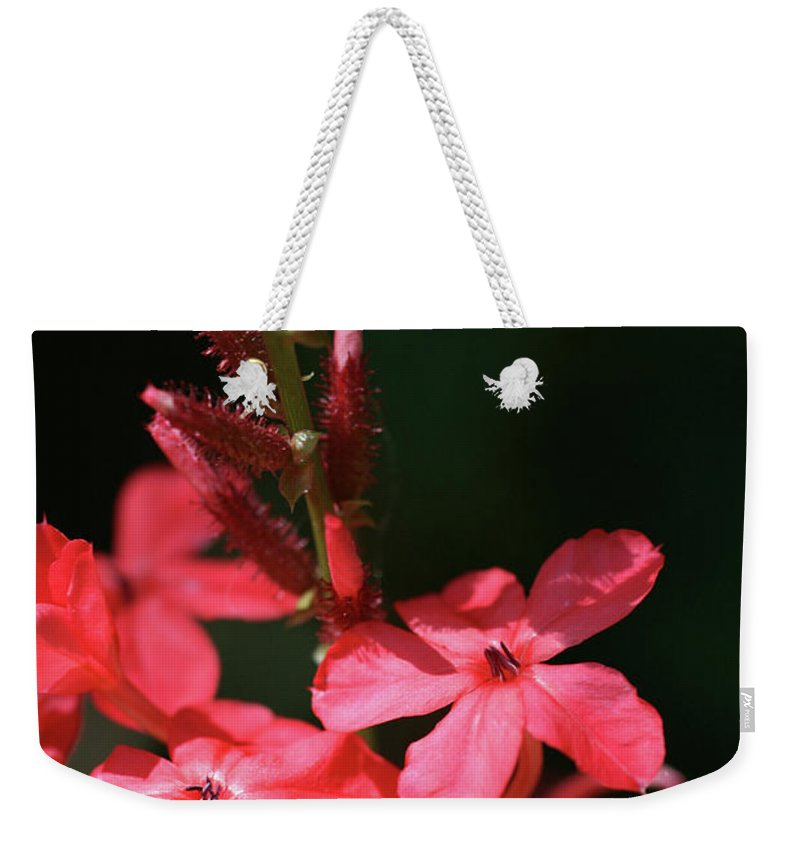 Close-up Photo Photography Flower Plant Red Star Five Petal Weekender Tote Bag featuring the photograph Tall Red Star by Christina Geiger