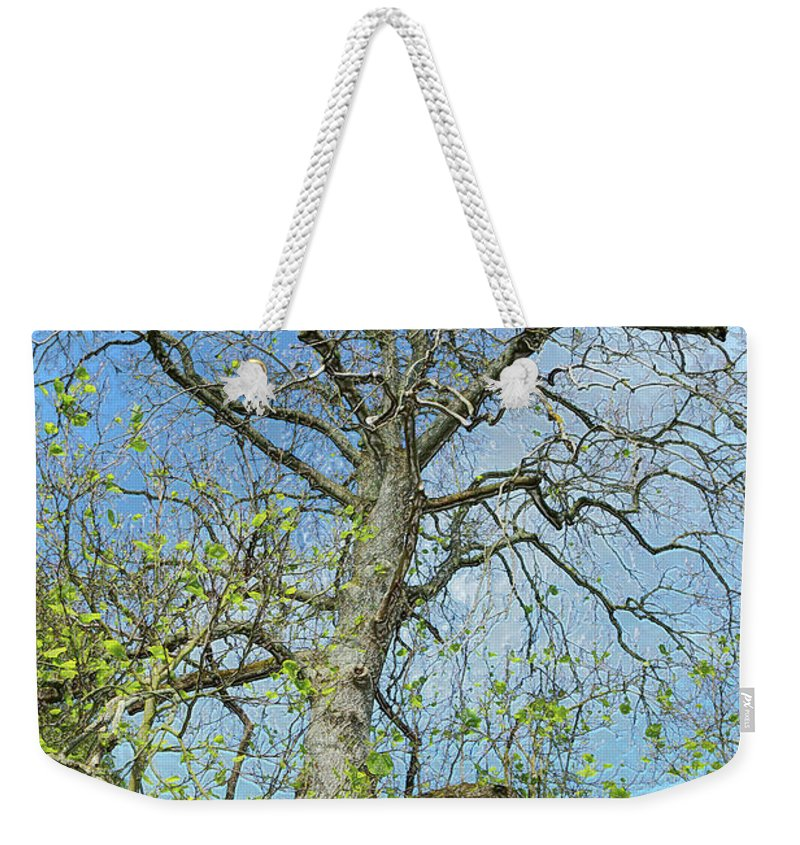 Tree Weekender Tote Bag featuring the photograph Tall Tree by Kevin Richardson