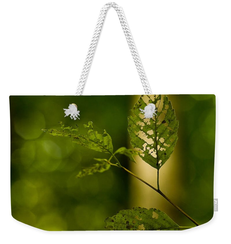 Leaf Weekender Tote Bag featuring the photograph Tattered Leaves by Mike Reid