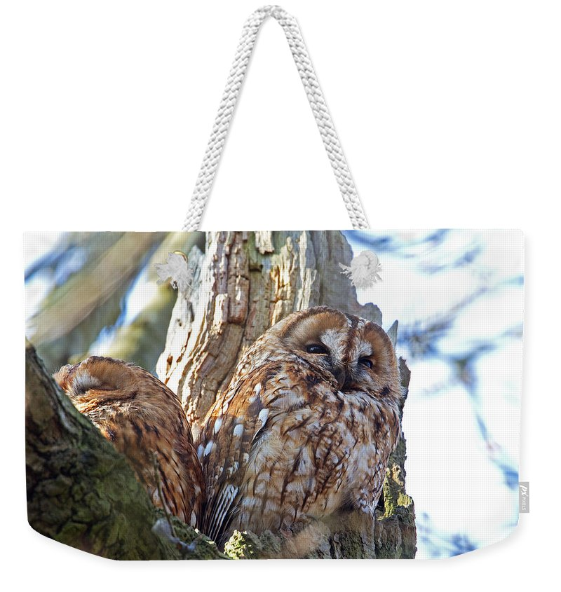 Tawny Owl Weekender Tote Bag featuring the photograph Tawny Owls by Bob Kemp