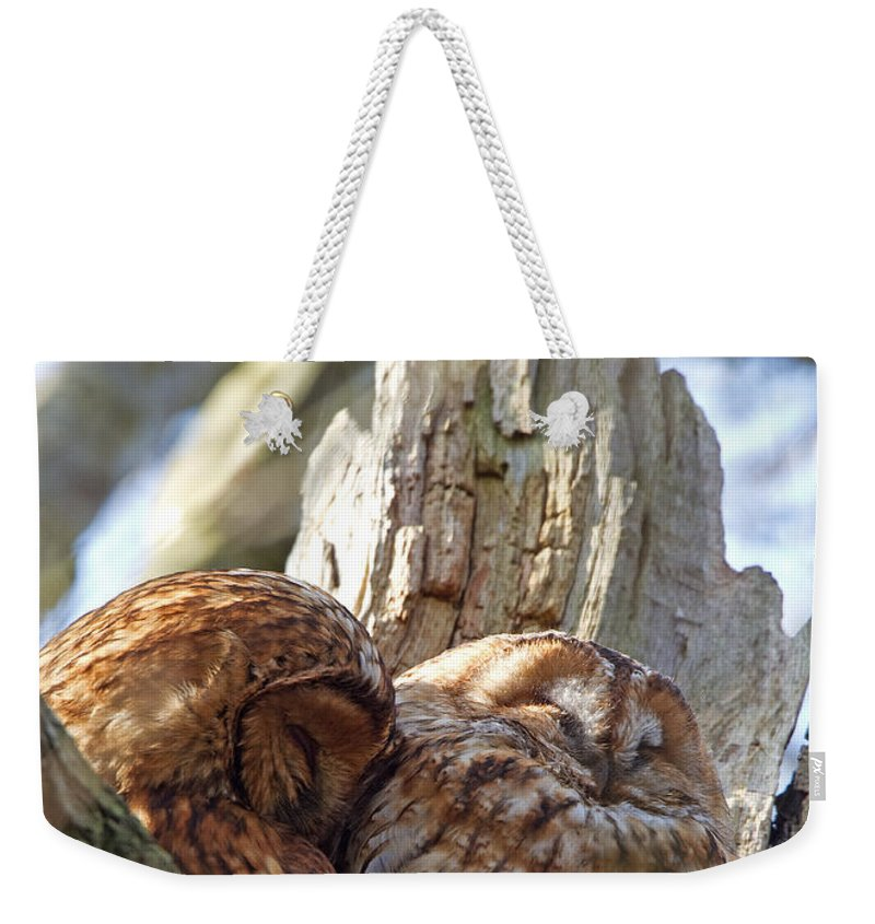 Tawny Owl Weekender Tote Bag featuring the photograph Tawny Owls In Love by Bob Kemp