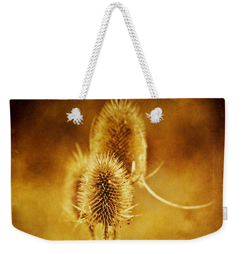 Teasel Weekender Tote Bag featuring the photograph Teasel Group by John Edwards