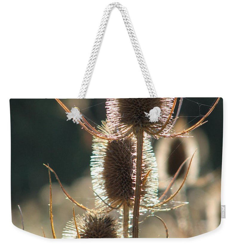 Teasle Weekender Tote Bag featuring the photograph Teasle In Morning Light by Bob Kemp