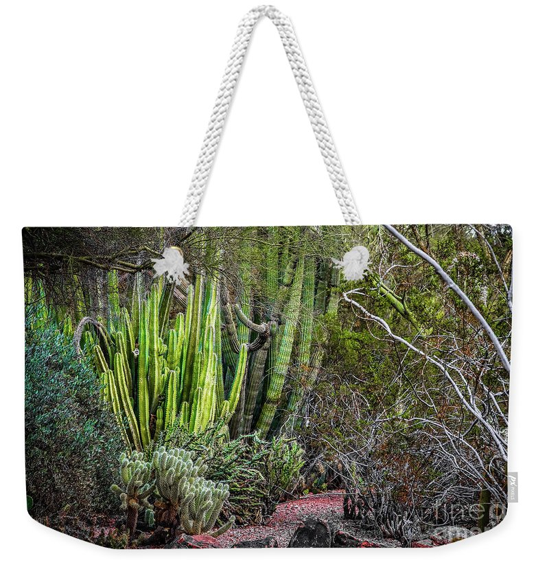 Jon Burch Weekender Tote Bag featuring the photograph Teddy Bear Cactus by Jon Burch Photography
