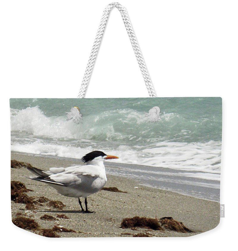 Florida Weekender Tote Bag featuring the photograph Tern's View Gp by Chris Andruskiewicz