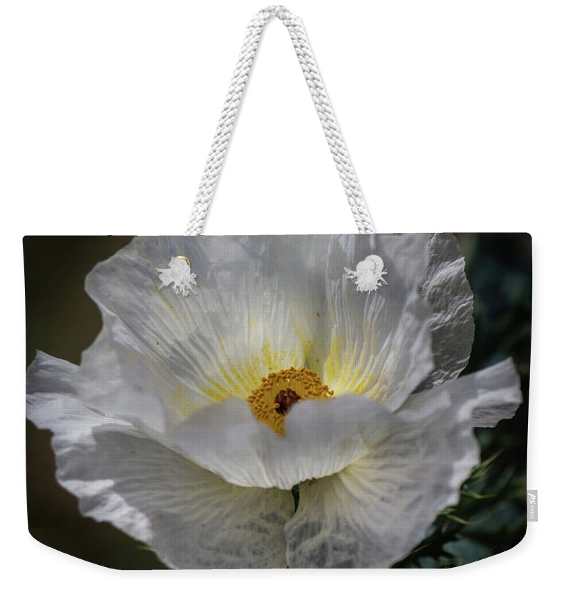 White Weekender Tote Bag featuring the photograph Texas Poppy by David Werner