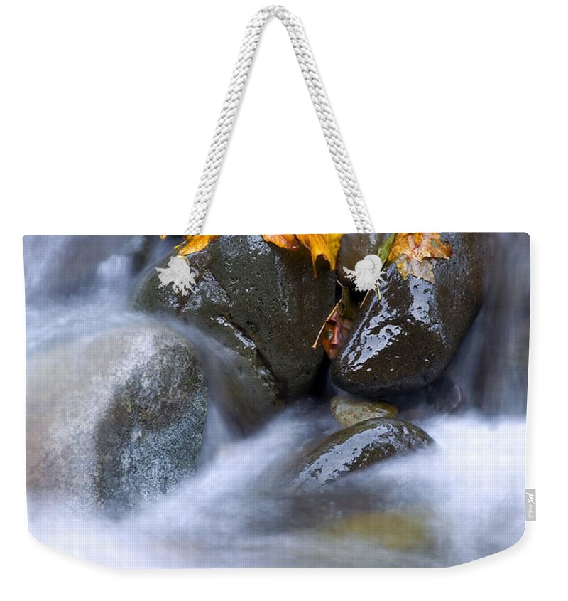 Maple Weekender Tote Bag featuring the photograph Textures Of Autumn by Mike Dawson
