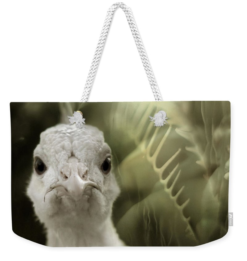 Peacock Weekender Tote Bag featuring the photograph Th White Peacock by Angel Ciesniarska