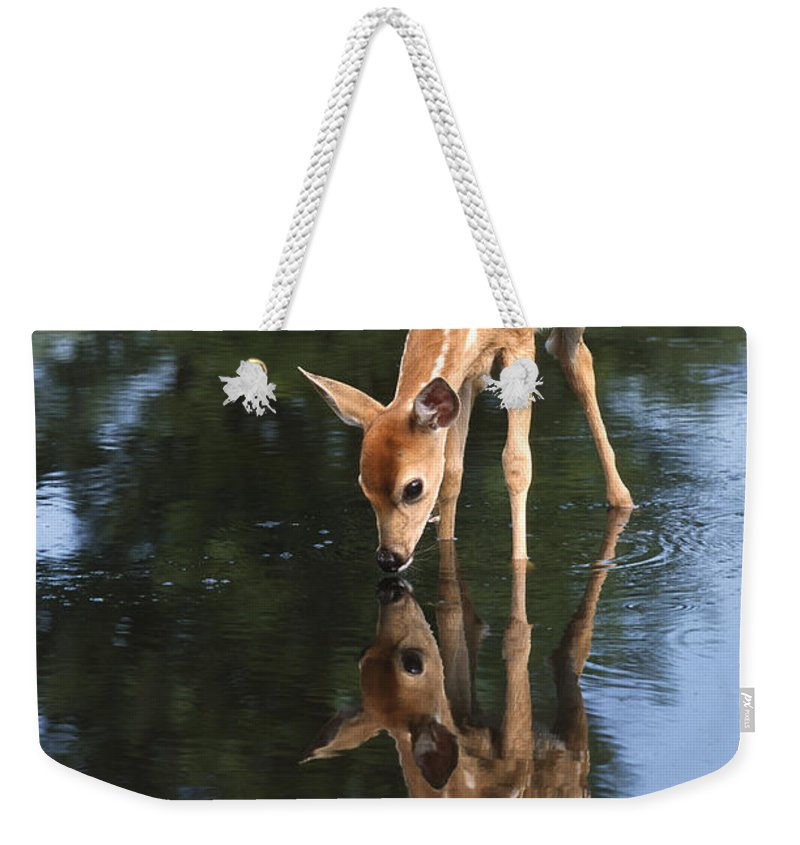 Deer Weekender Tote Bag featuring the photograph That Must Be Me by Sandra Bronstein