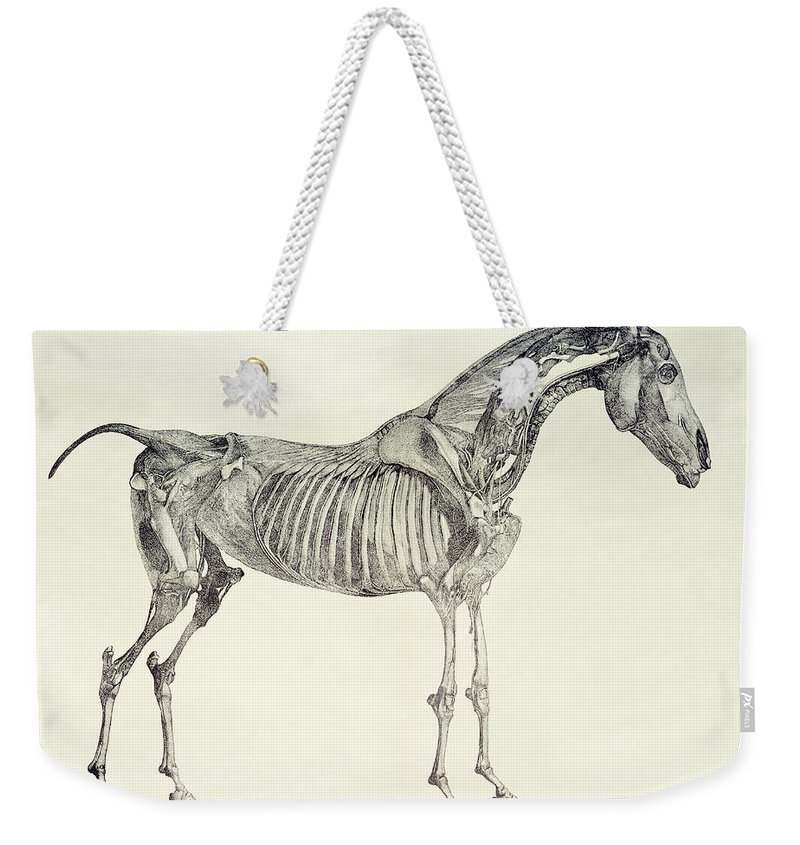 The Anatomy Of The Horse Weekender Tote Bag For Sale By George Stubbs
