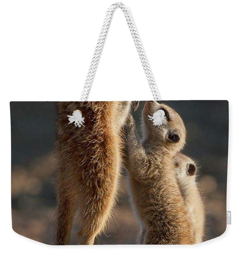 Meerkat Weekender Tote Bags