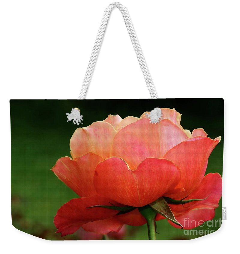 Rose Weekender Tote Bag featuring the photograph The Beauty Of A Rose by Christiane Schulze Art And Photography