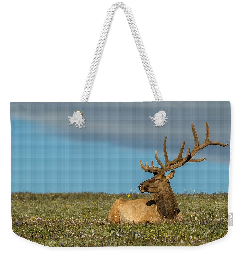 Cervus Canadensis Weekender Tote Bag featuring the photograph The Big Guy Resting by Vicki Stansbury