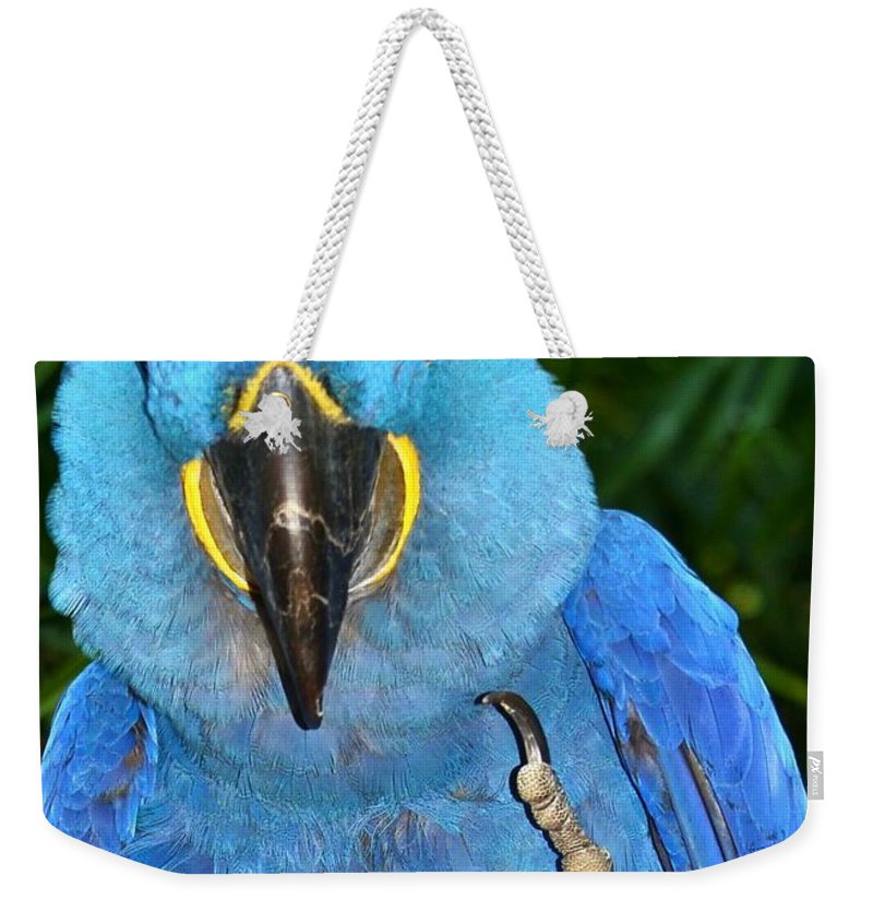 For The Birds Weekender Tote Bag featuring the photograph The Bird by Lisa Renee Ludlum