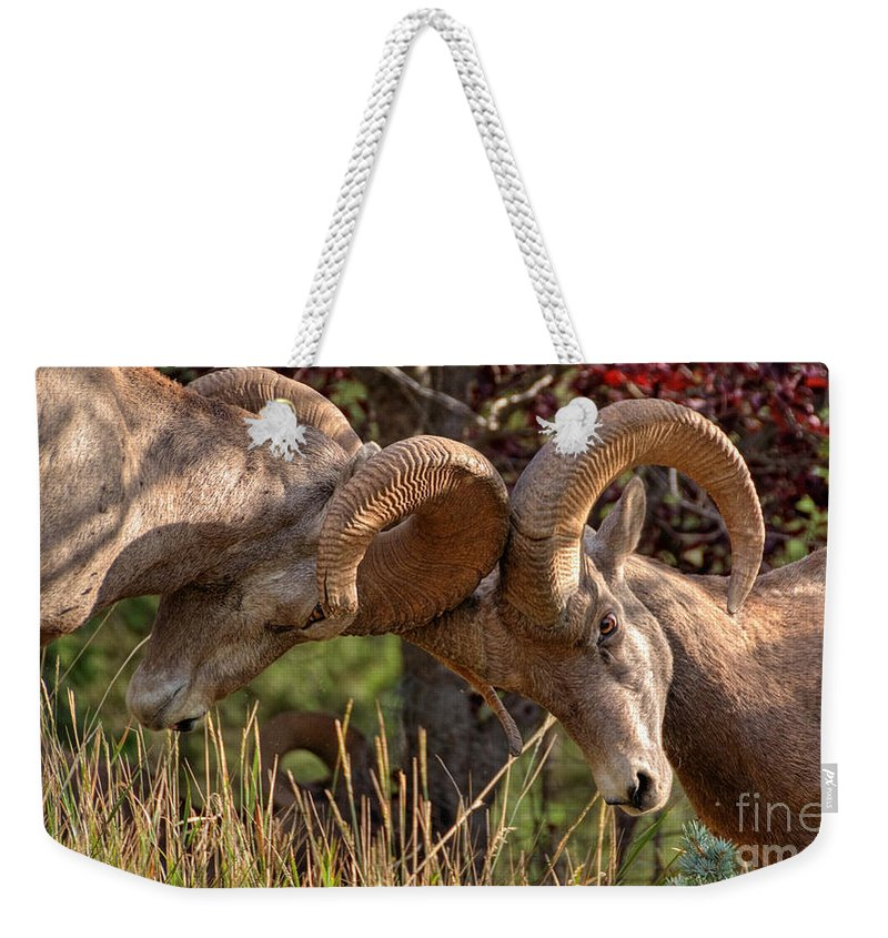 Bighorn Ram Weekender Tote Bag featuring the photograph The Bump by James Anderson