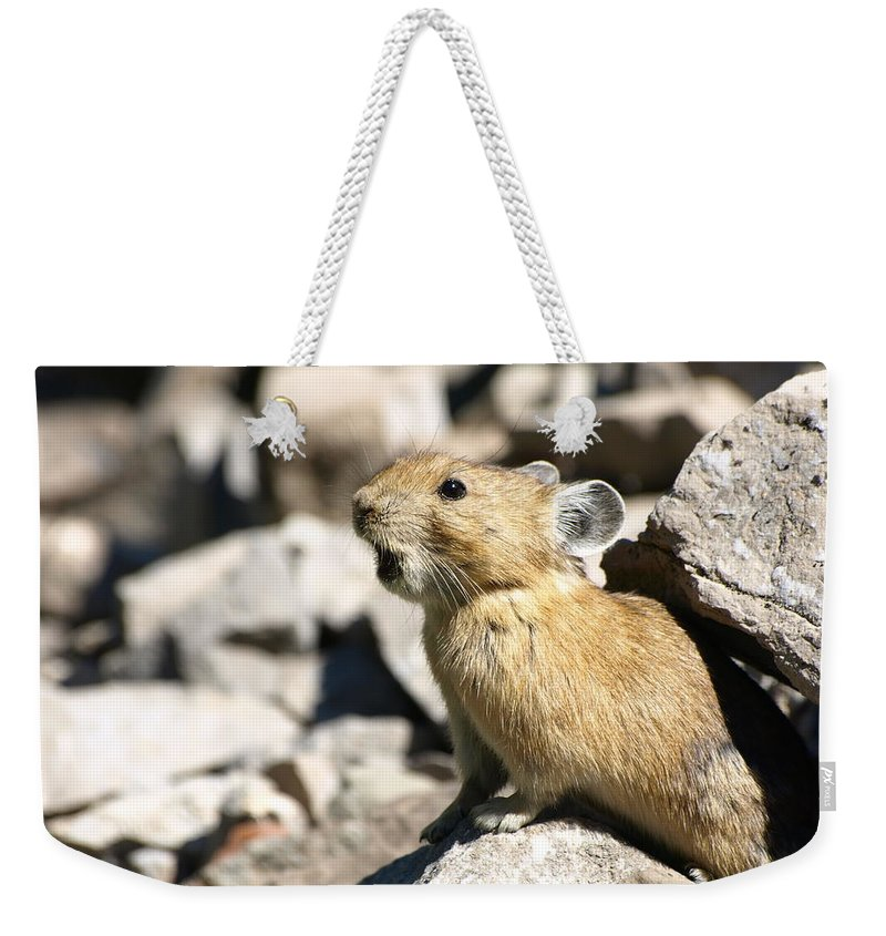 Animals Weekender Tote Bag featuring the photograph The Call Of The Pika by DeeLon Merritt