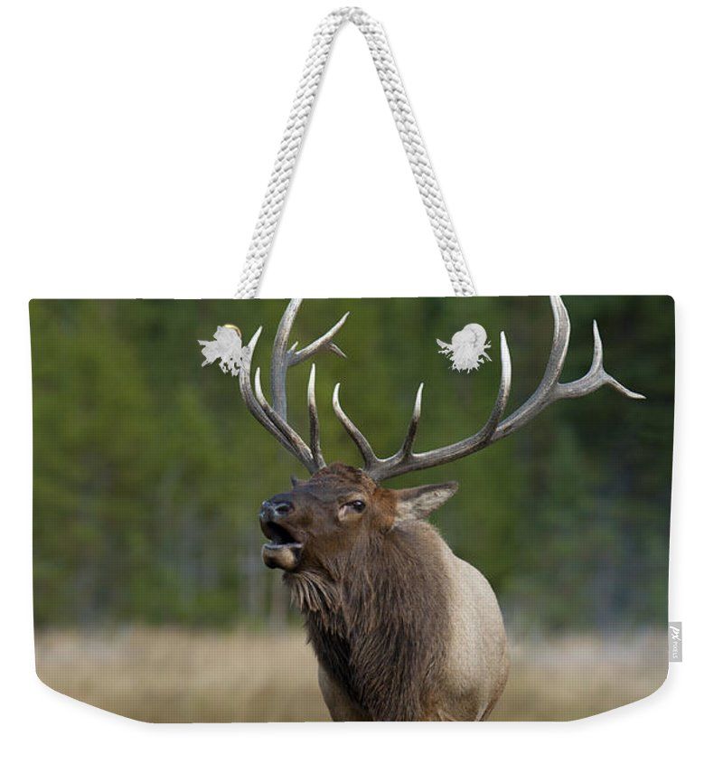Yellowstone Weekender Tote Bag featuring the photograph The Challenger by Sandra Bronstein