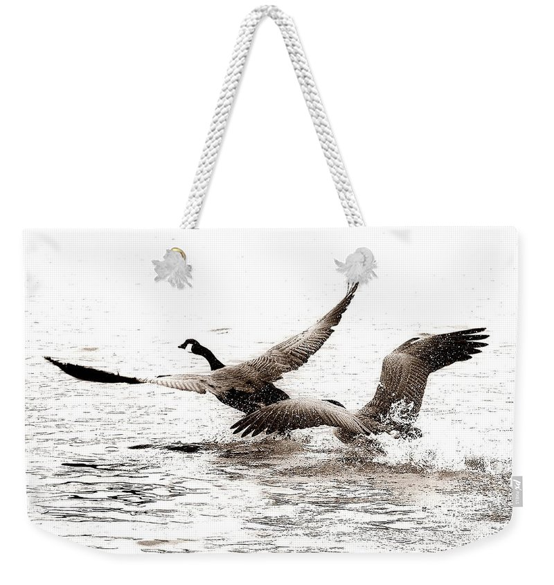 Birds Weekender Tote Bag featuring the photograph The Chase by Angie Tirado