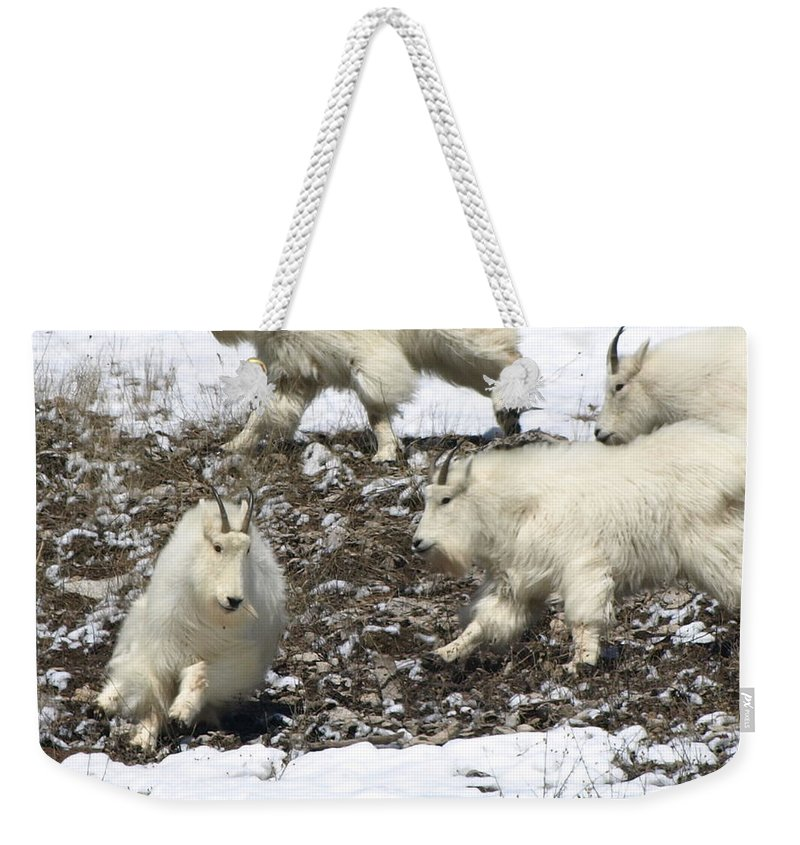 Animals Weekender Tote Bag featuring the photograph The Chase by DeeLon Merritt