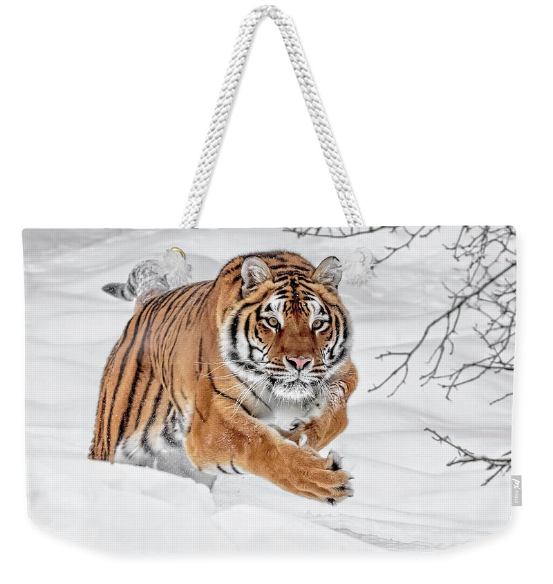 The Chase Is On Weekender Tote Bag featuring the photograph The Chase Is On by Wes and Dotty Weber