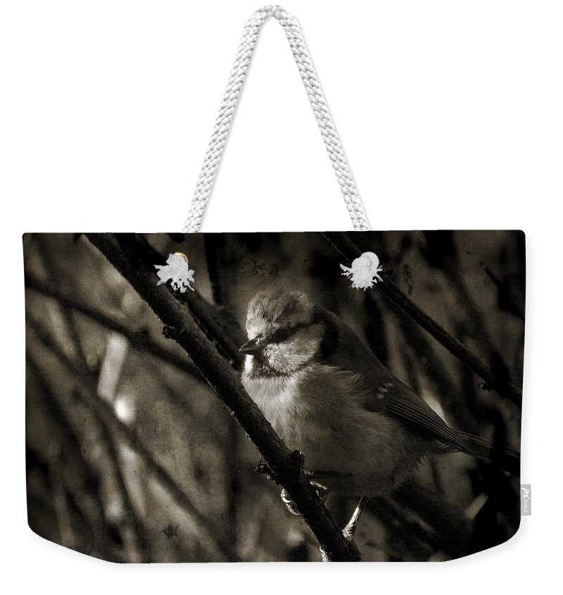 Blue Tit Weekender Tote Bag featuring the photograph The Cold Morning by Angel Ciesniarska
