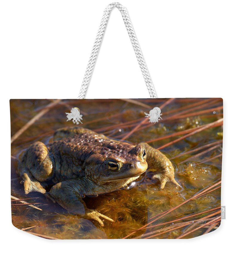 Lehtokukka Weekender Tote Bag featuring the photograph The Common Toad 1 by Jouko Lehto