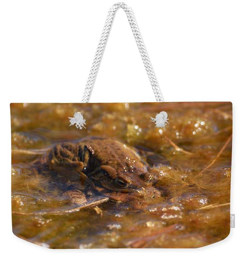 Lehtokukka Weekender Tote Bag featuring the photograph The Common Toads 2 by Jouko Lehto