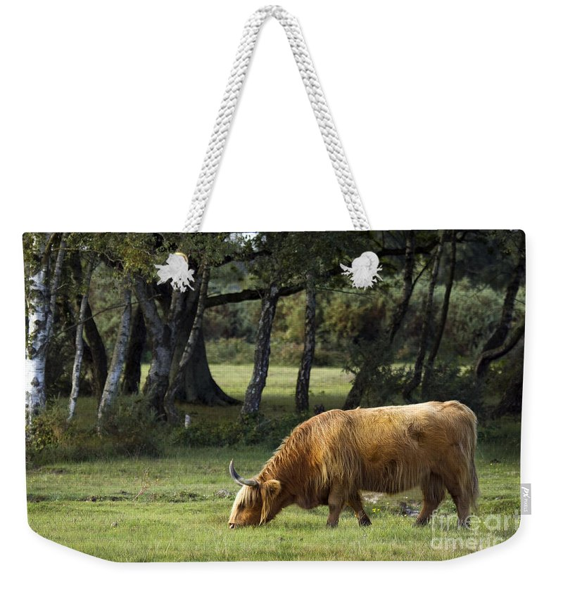 Heilan Coo Weekender Tote Bag featuring the photograph The Creature Of New Forest by Angel Ciesniarska