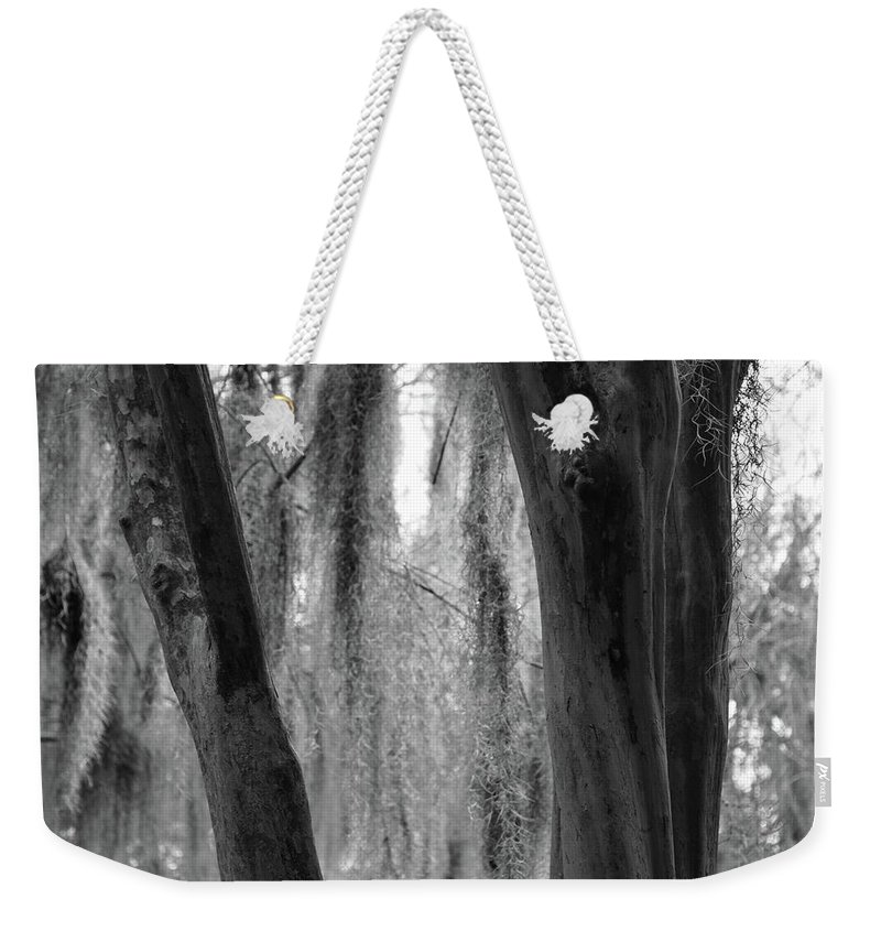 Tree Weekender Tote Bag featuring the photograph Cypress In The Bayou by Jenny Regan