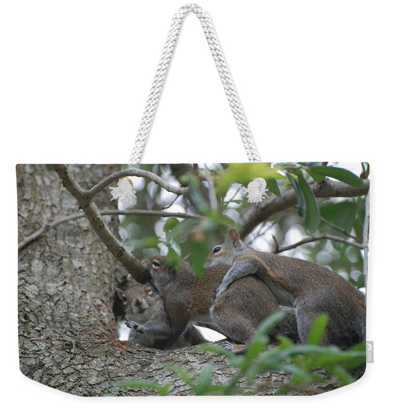 Squirrels Weekender Tote Bag featuring the photograph The Fight For Life by Rob Hans