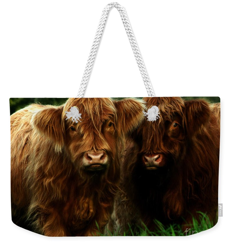 Heilan Coo Weekender Tote Bag featuring the photograph The Fluffy Cows by Angel Ciesniarska
