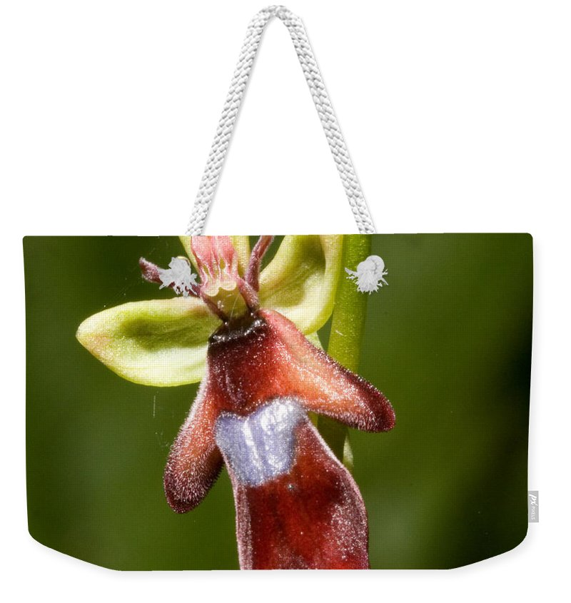 Fly Weekender Tote Bag featuring the photograph The Fly Orchid by Bob Kemp