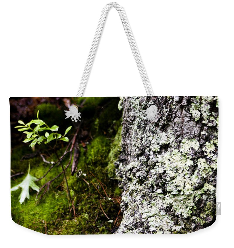 Moss Weekender Tote Bag featuring the photograph The Forest Floor Bluestone State Park West Virginia by Teresa Mucha