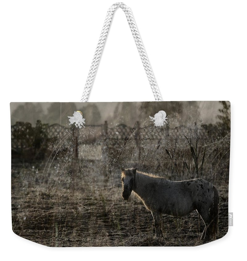 Pferd Weekender Tote Bag featuring the photograph The Frosty Morning by Angel Tarantella