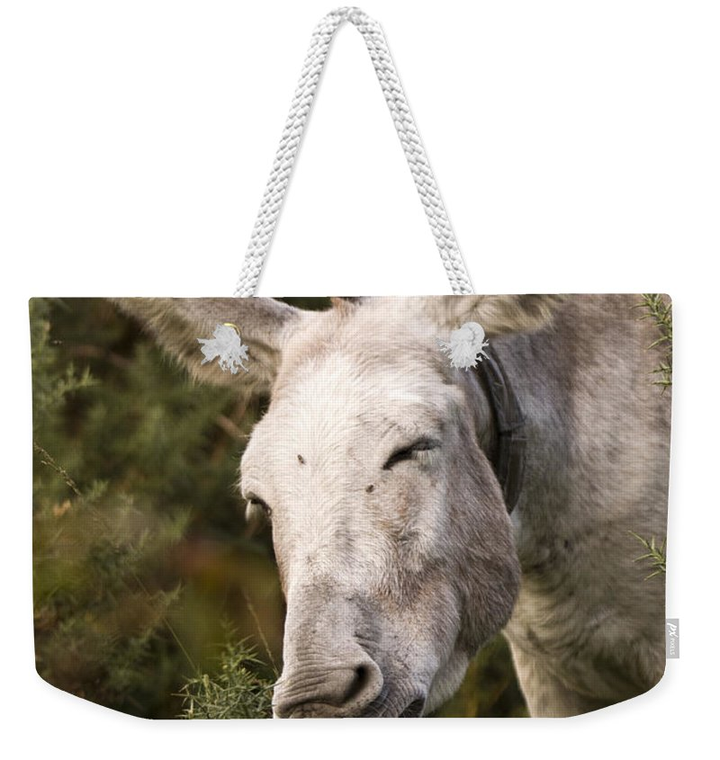 Donkey Weekender Tote Bag featuring the photograph the Funny Donkey by Angel Tarantella