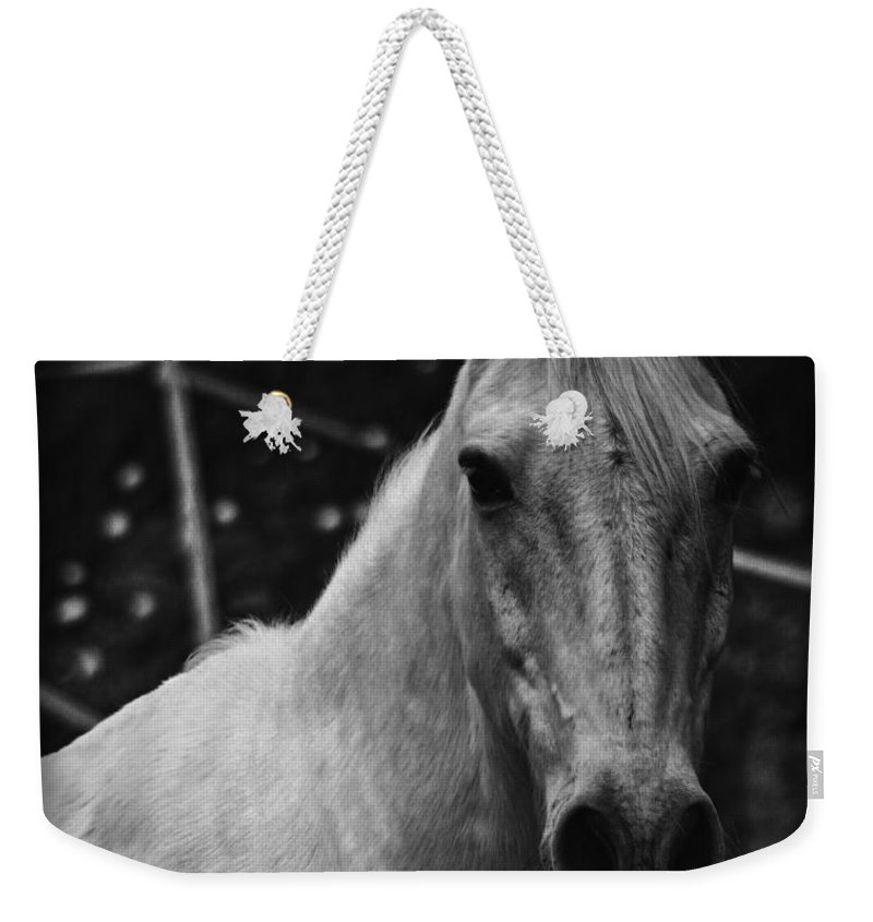 Horse Weekender Tote Bag featuring the photograph The General by Clare Bevan