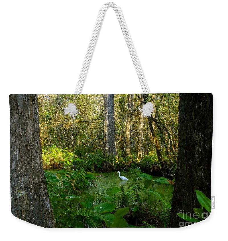 Corkscrew Swamp Weekender Tote Bag featuring the photograph The Great Corkscrew Swamp by David Lee Thompson