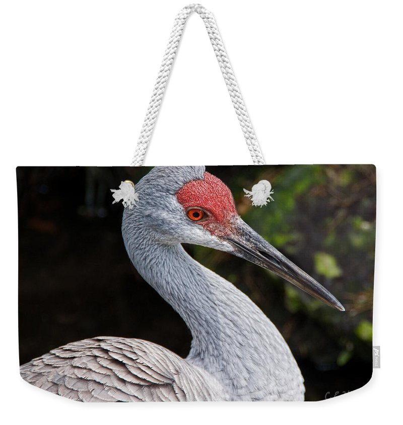 Bird Weekender Tote Bag featuring the photograph The Greater Sandhill Crane by Christopher Holmes