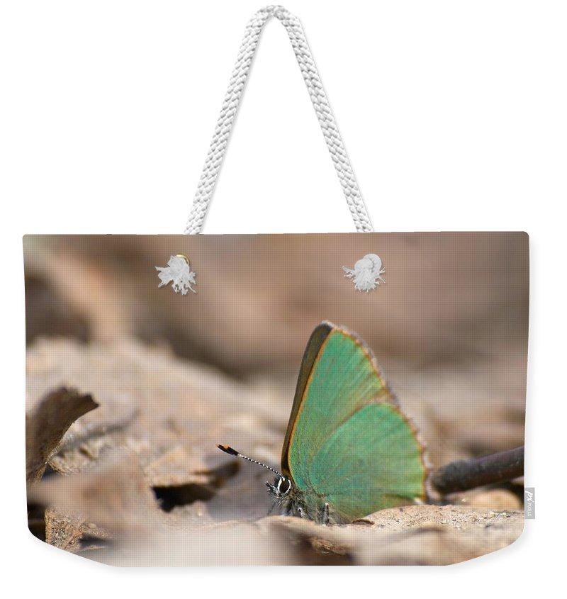 Lehtokukka Weekender Tote Bag featuring the photograph The Green Hairstreak by Jouko Lehto