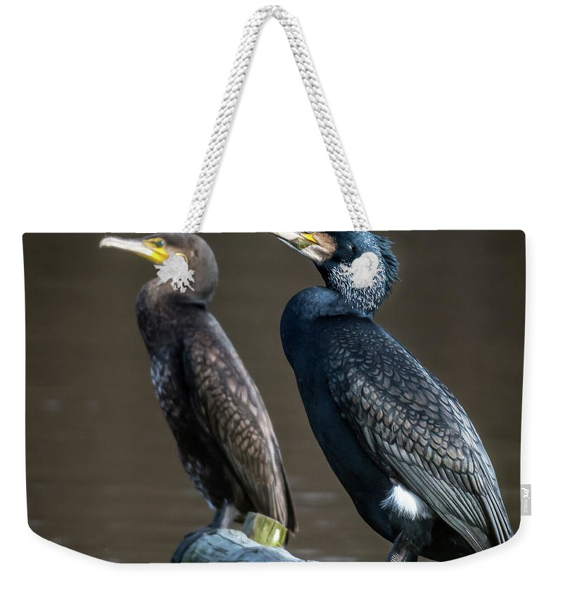 Cormorant Weekender Tote Bag featuring the photograph The Happy Couple by Nigel Wooding