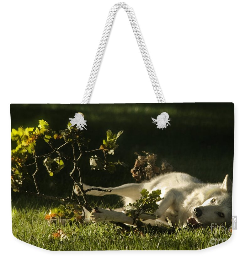 Wolf Weekender Tote Bag featuring the photograph The Happy Wolf by Angel Ciesniarska