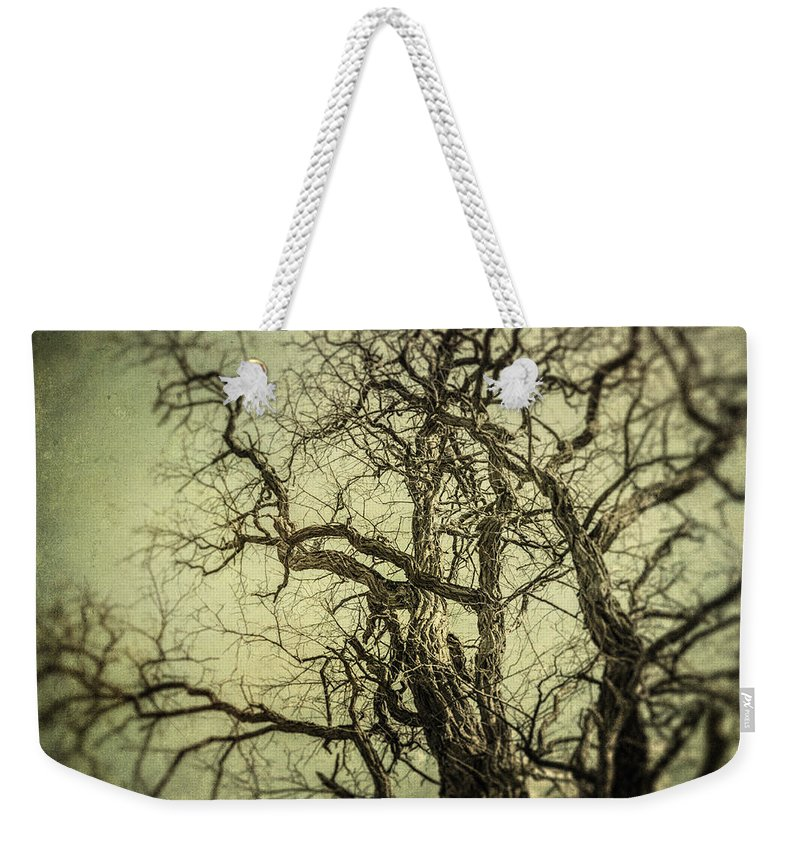 Tree Weekender Tote Bag featuring the photograph The Haunted Tree by Lisa Russo