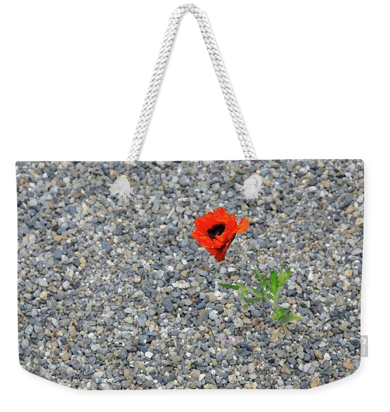 Poppy Weekender Tote Bag featuring the photograph The Hopeful Poppy by Michael Bessler
