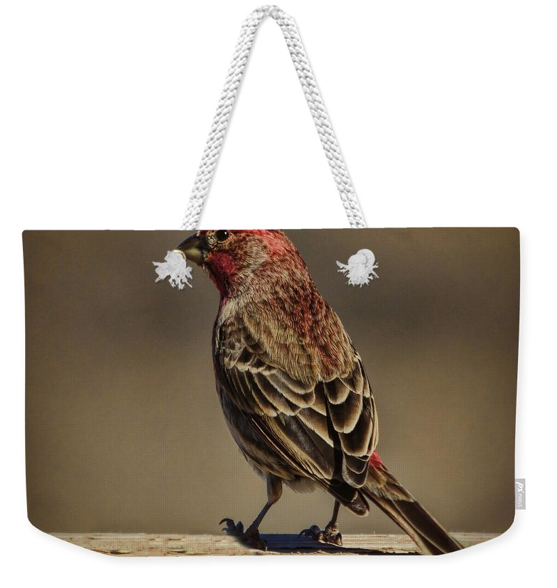 Wildlife Weekender Tote Bag featuring the photograph The House Finch by Janice Pariza